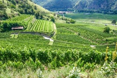 1 Wachau Vineyards