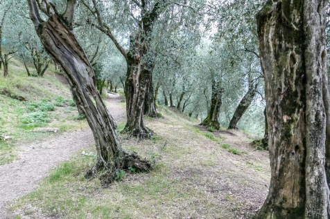 3 Castle olive orchard
