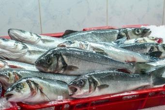 5 FRESH FISH_