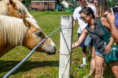 7 equestrine friends