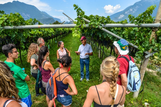 7 Vineyard visit