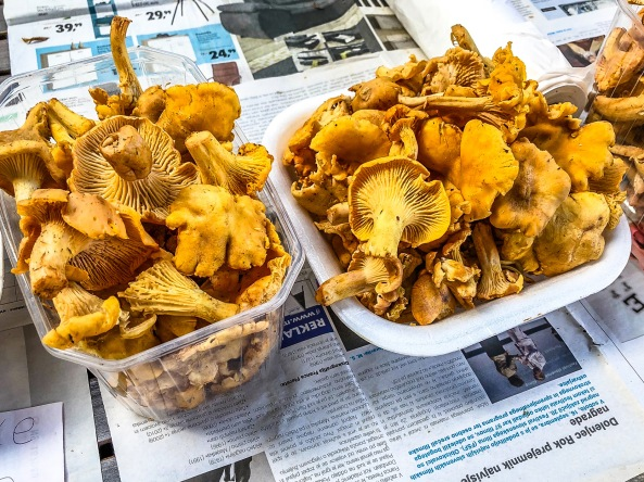 8 Fresh from the forest Chantarelles